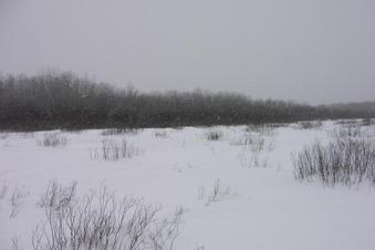 #1: General surroundings of the site 51N 98W, it's snowing