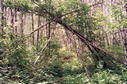 "#7: Mysterious structure over the trail at 52° 0.067""N  100° 0.348""W"