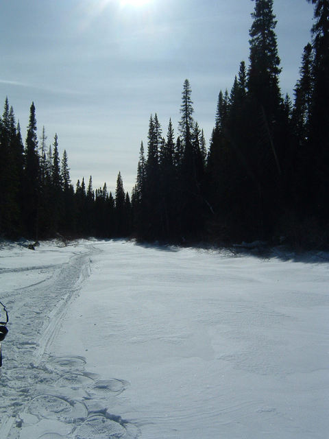This pic shows the general area from the river, showing the dense Labrador Black Spruce forest. The confluence is uphill to the left about 250m.