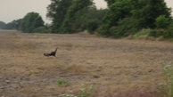 #7: turkey hen leaving the CP area