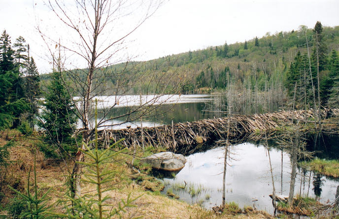 The beaver dam 1km from the confluence