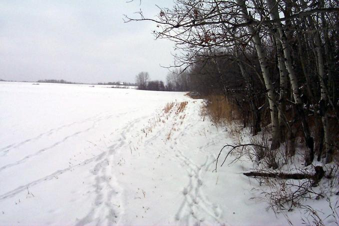 "View West with ""wildlife"" tracks - deer and Foxes (us!)"