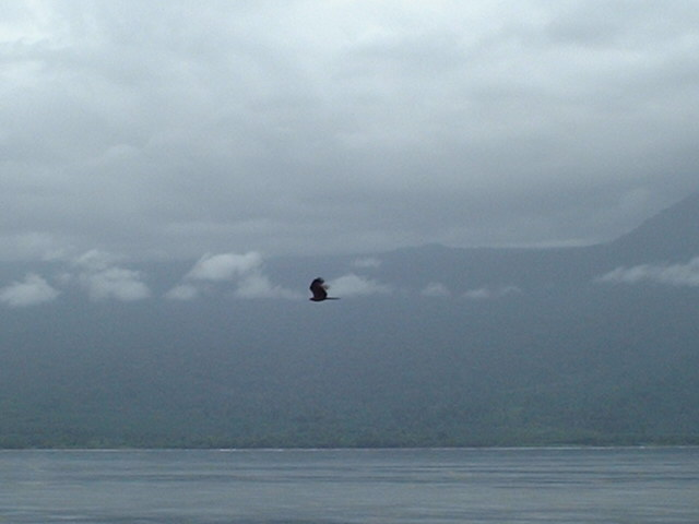A sea hawk who accompanied us