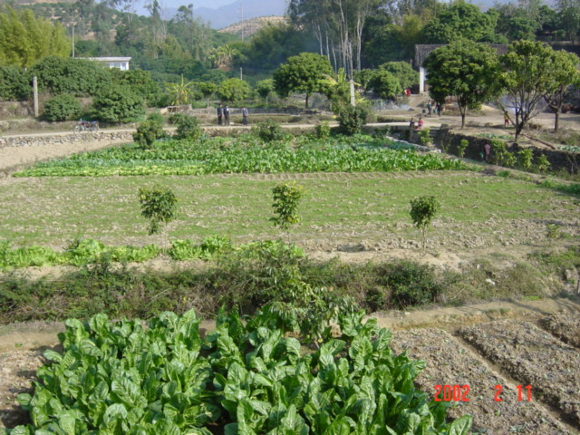 The village vegetable patch
