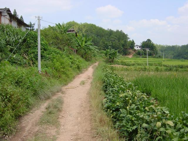 Last power pole, one kilometre from confluence, looking back along road to Zhongshan