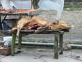 #3: Freshly slaughtered calf for sale on the main road in Dàtáng.