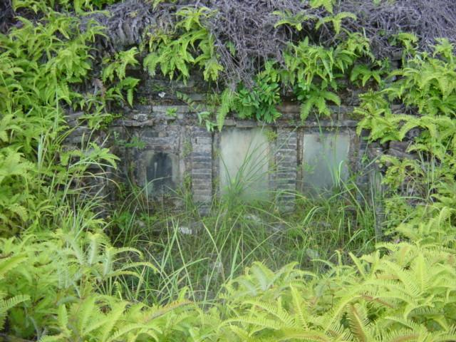Old grave near confluence, overgrown with ferns