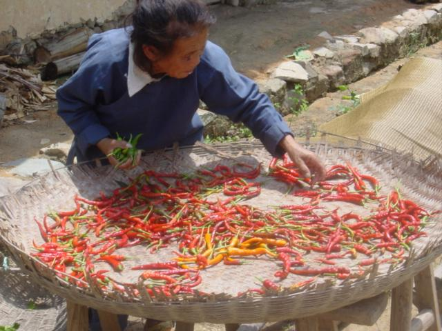Chillies--red, yellow and green