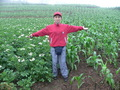 #5: Ah Feng standing between fields of potatoes and corn.