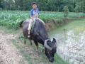 #8: Boy riding a water buffalo near the confluence.