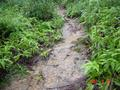 #2: Narrow muddy path heading uphill directly towards confluence.
