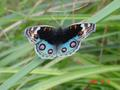 #10: Exquisitely coloured butterfly.