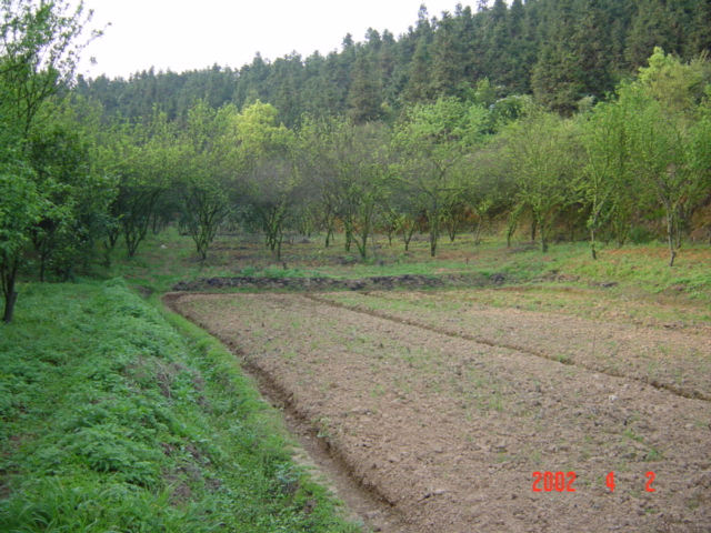 Small orchard behind the farmhouse