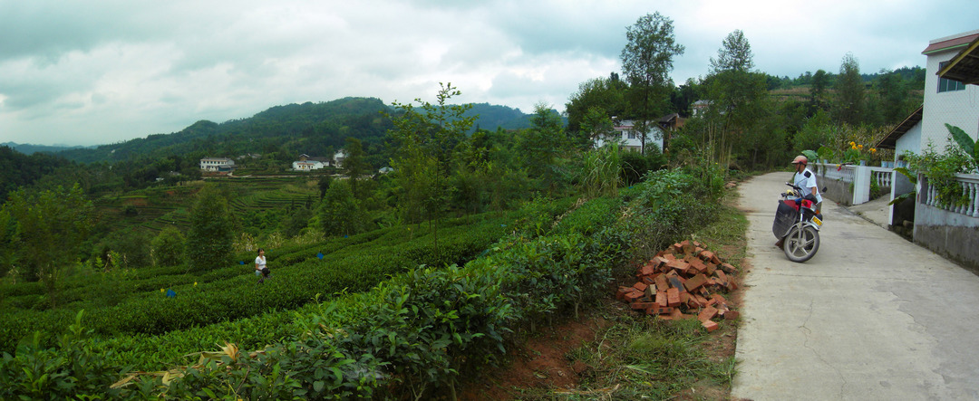 Xiao Pang on right at one of the many tea plantations