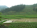 #5: Peasants planting rice; the confluence 750 metres SE on the other side of the hill.