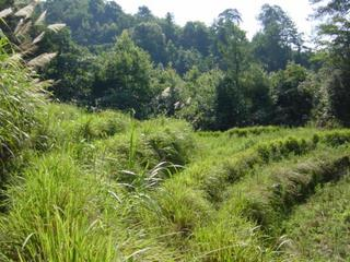 #1: Confluence located in forest beyond disused paddy fields