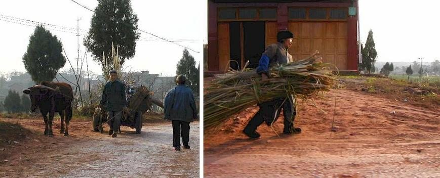 The unsung heros and backbone of China, hard at work in the countryside