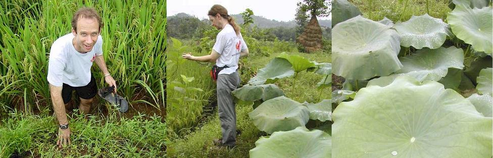 Peter trying to get a perfect reading in a rice paddy but lost a shoe! - Targ getting as close as he can to the confluence.