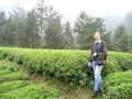 #5: We wound our way along little paths through tea plantations.