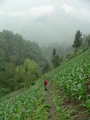 #6: Ah Feng climbs up through a corn field on a steep slope, a few dozen metres below the confluence.