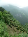 #3: Tea plantation on the hillside just below the beginning of the path.