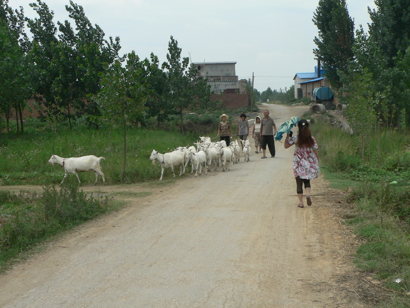 Ah Feng on the cement road to Kāngzhuāng Village