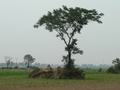 #10: Ah Feng next to the tree and mound, SE of the confluence