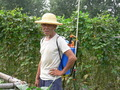 #6: Farmer wearing a poison-spraying backpack