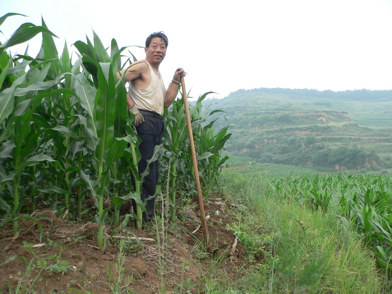 Farmer in cornfield near confluence