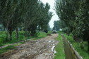 #7: The muddy road leading to the confluence point with an irrigation ditch we used to clean up the mud