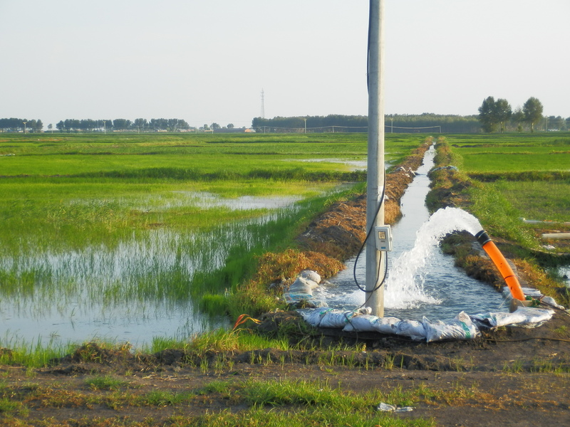 Irrigation of Rice Paddies