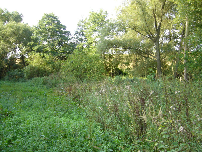 View south (nettles and creek to the right)