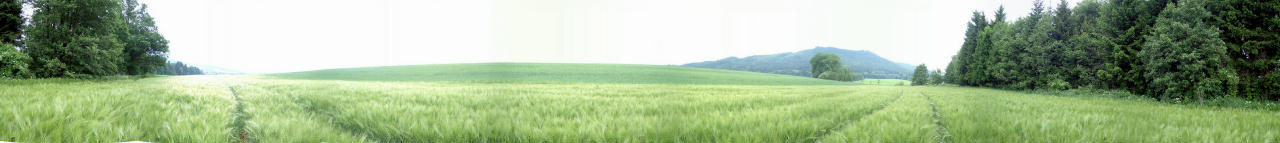 Panorama from east to north out of the barley grain
