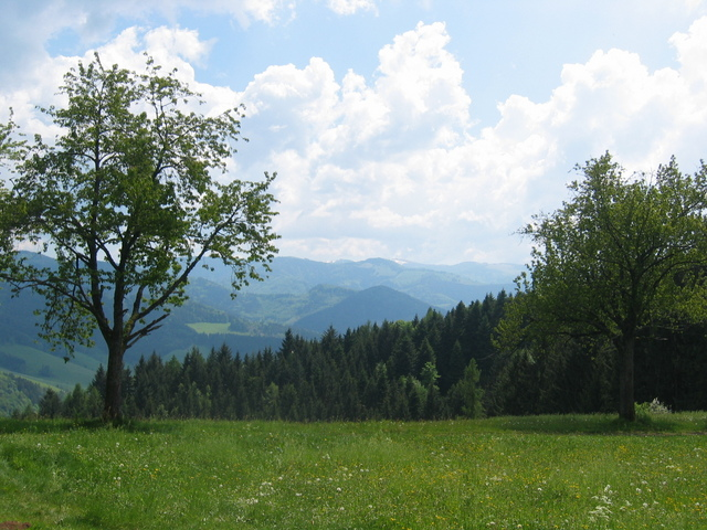 View to the Feldberg