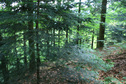 #2: View northward - forest downhill