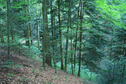 #3: View eastward - forest road in dense for