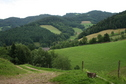 #7: View of typical Blackforest landscape 100 m Northeast outside the forest
