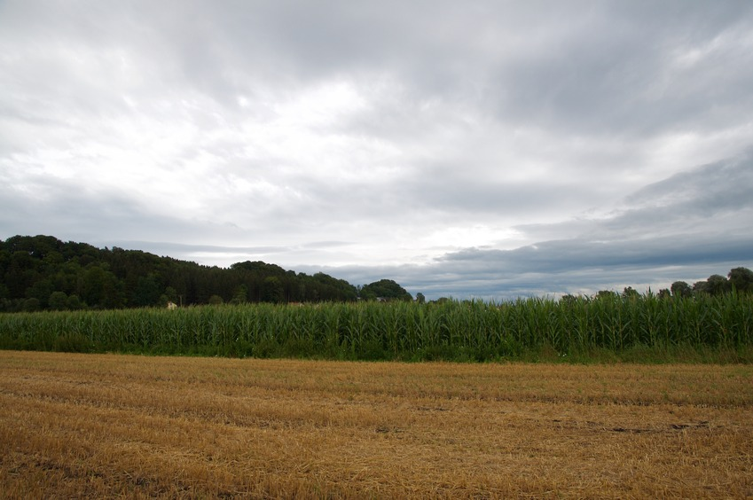 View East (towards a cornfield)