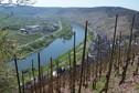 #10: Vineyards overlooking the Moselle river