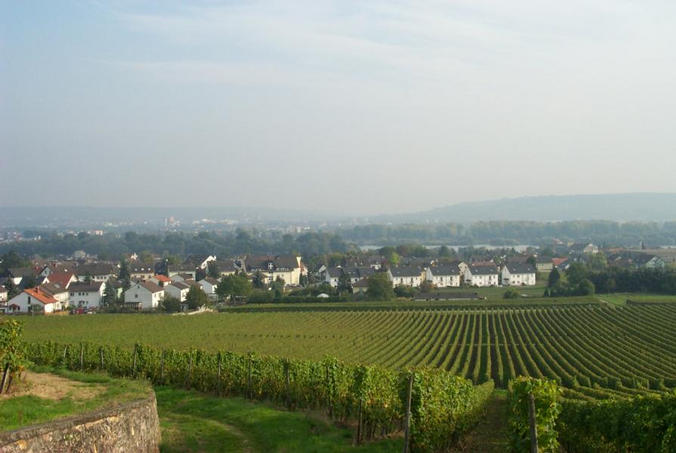 View over Oestrich-Winkel towards the Rhine / Blick über Oestrich-Winkel in Richtung Rhein