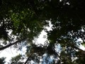 #7: Trees and sky above