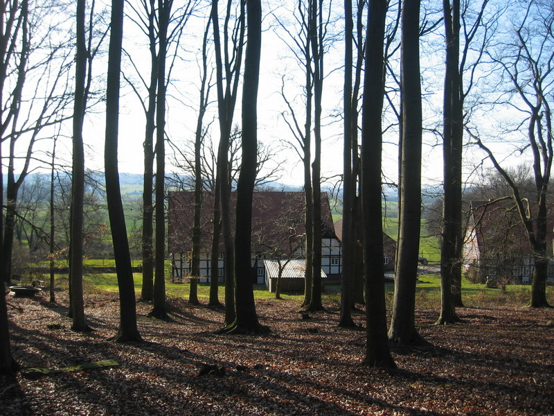 Nearby Forest; Village Hagendonop in the Background