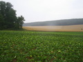 #4: View to the west; sugar beets