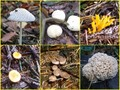 #9: Tiny mushrooms everywhere