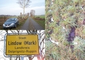 #10: Road from Banzendorf to Lindow and boggy ground