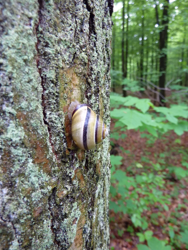 A beautiful snail