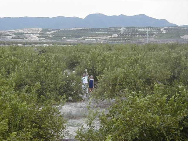 The point in field of Lemon trees