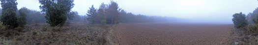 #1: 360-degree panorama in the morning mist