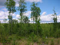 #2: View to the North with some Alder trees along a ditch