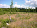 #3: View to the East over the clearfelling site